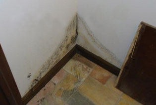 Mold Removal Services in Southeastern, PA
