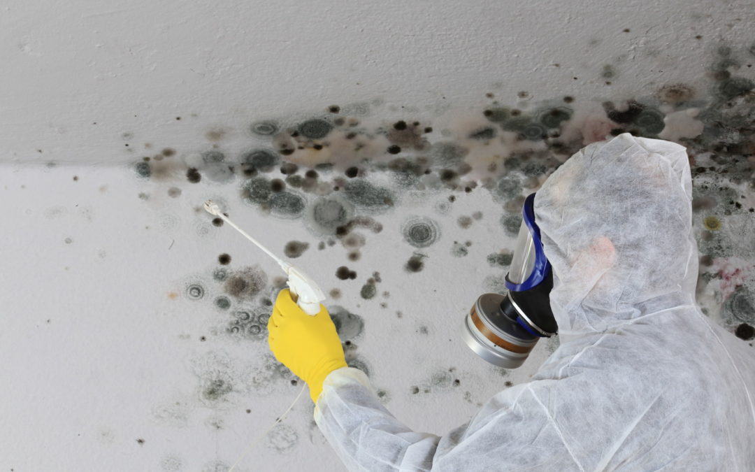 7 Tips on Choosing a Mold Remediation Company for Homeowners