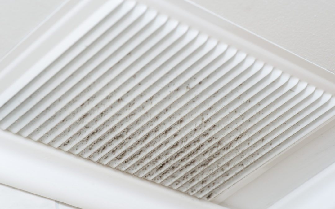 7 Common Mold Removal Mistakes to Avoid for Homeowners